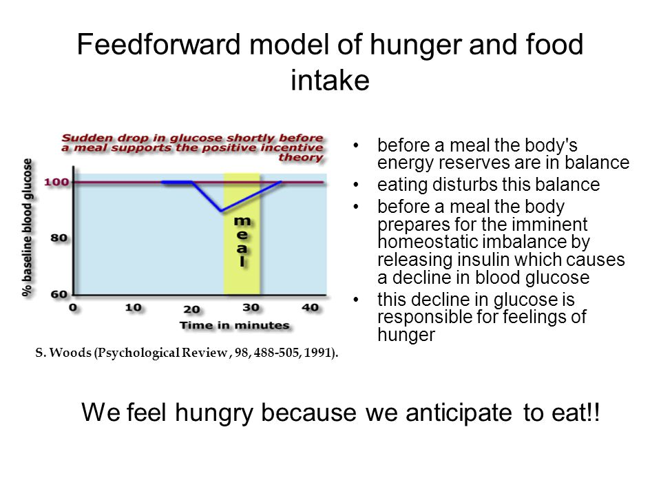 Feedforward model of hunger and food intake
