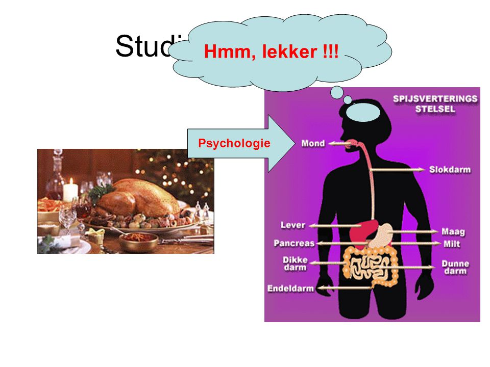 Studie van Voeding Hmm, lekker !!! Psychologie