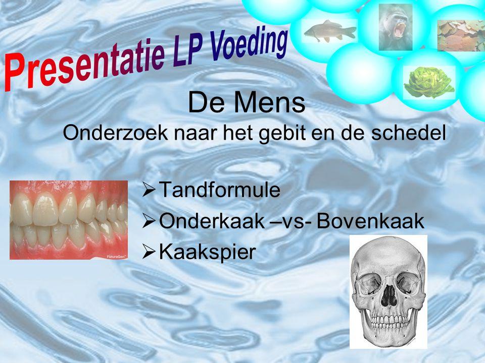 Onderzoek naar het gebit en de schedel
