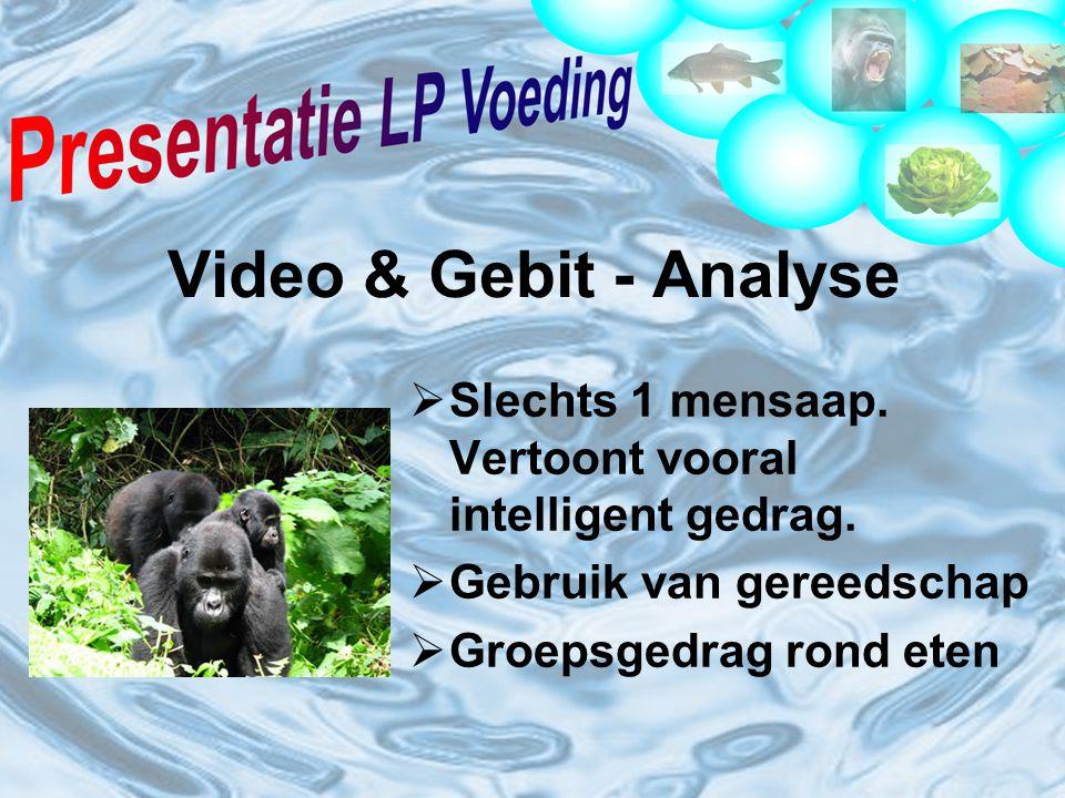 Video & Gebit - Analyse Slechts 1 mensaap. Vertoont vooral intelligent gedrag. Gebruik van gereedschap.