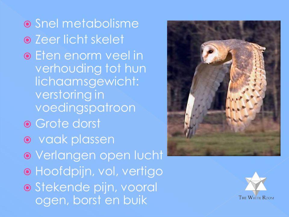 Snel metabolisme Zeer licht skelet. Eten enorm veel in verhouding tot hun lichaamsgewicht: verstoring in voedingspatroon.