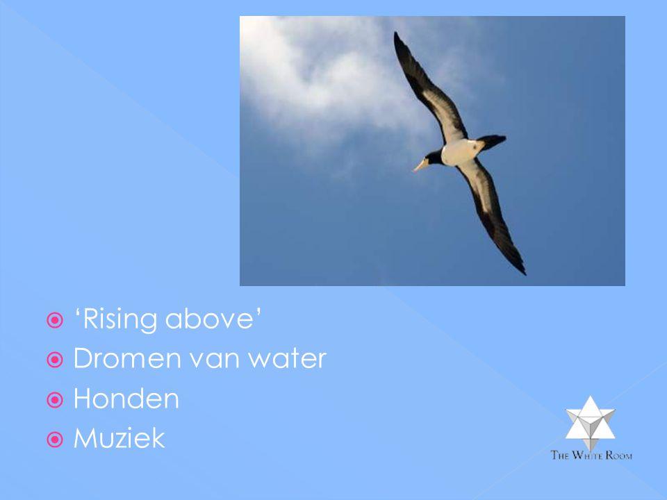 'Rising above' Dromen van water Honden Muziek