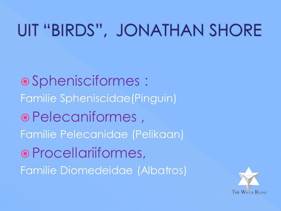 Sphenisciformes : Pelecaniformes , Procellariiformes,