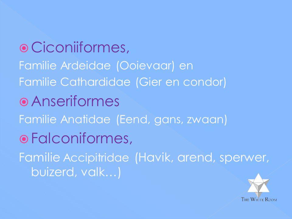 Ciconiiformes, Anseriformes Falconiformes,