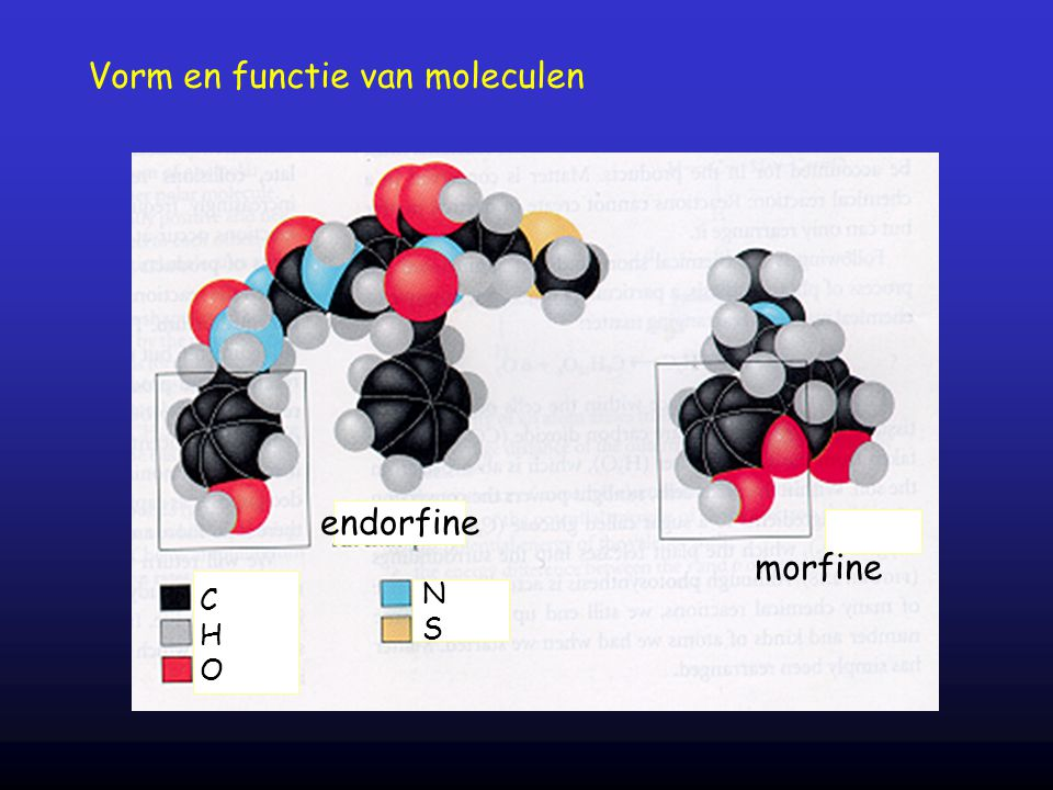 Vorm en functie van moleculen