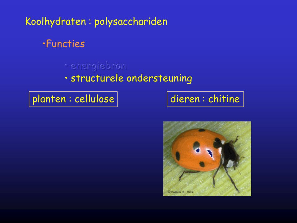 Koolhydraten : polysacchariden