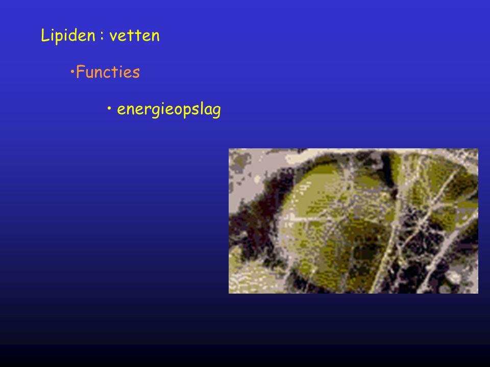 Lipiden : vetten Functies energieopslag