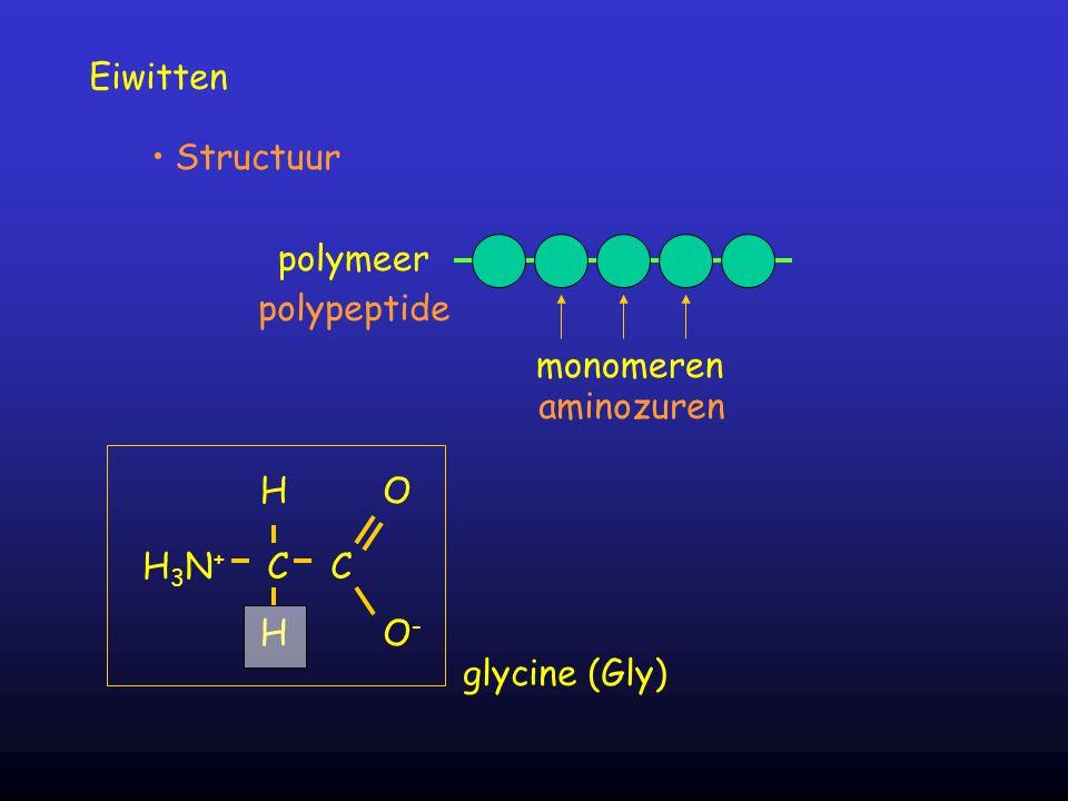 Eiwitten Structuur polymeer polypeptide monomeren aminozuren H3N+ C C