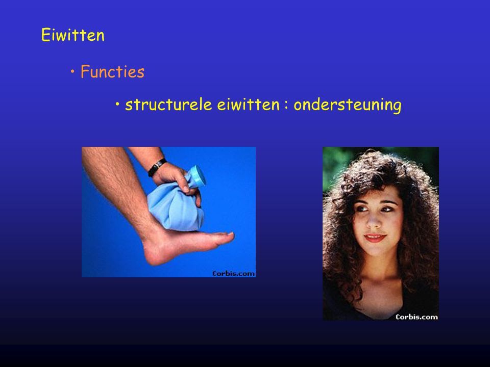 structurele eiwitten : ondersteuning
