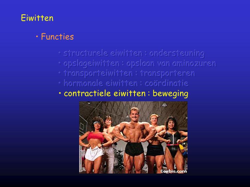 Eiwitten Functies. structurele eiwitten : ondersteuning. opslageiwitten : opslaan van aminozuren.