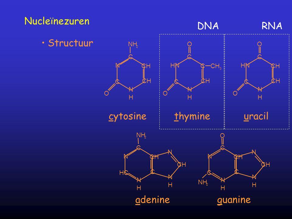Nucleïnezuren DNA RNA Structuur cytosine thymine uracil adenine