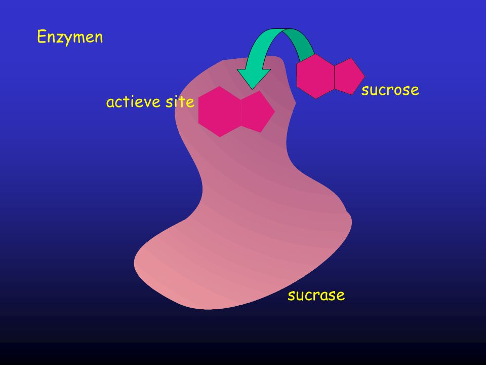 Enzymen sucrose actieve site sucrase