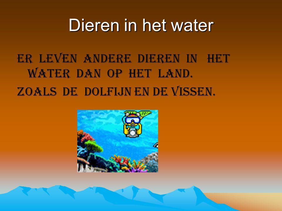 Dieren in het water Er leven andere dieren in het water dan op het land.
