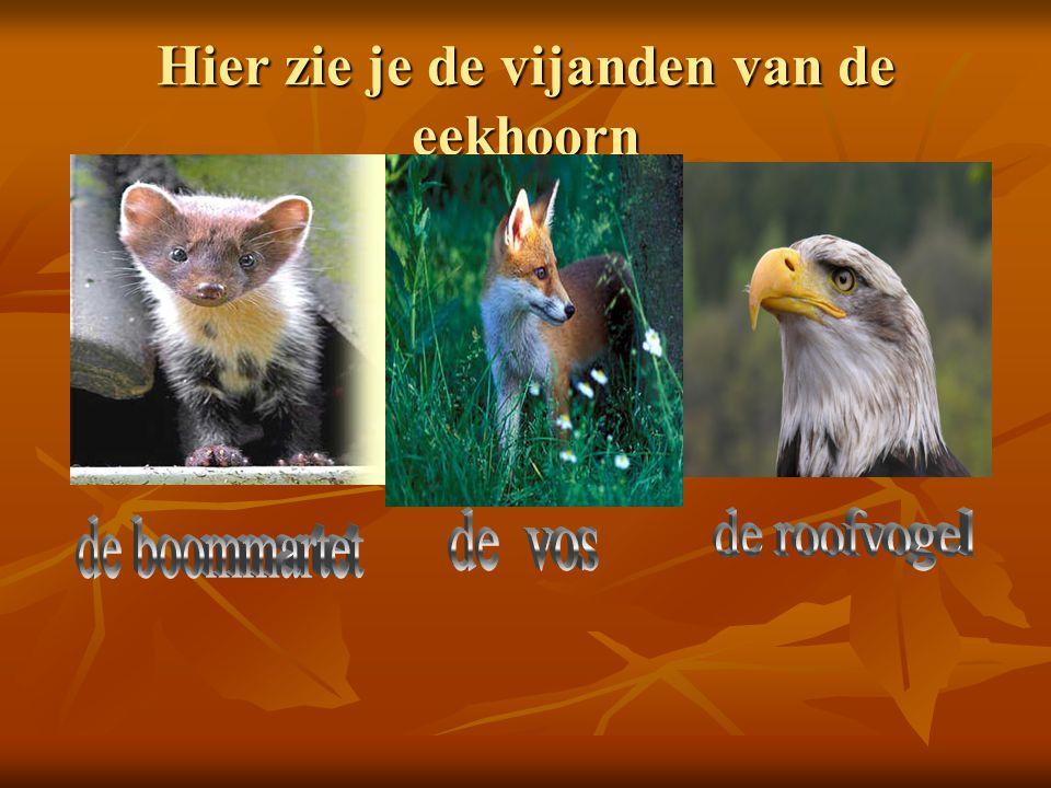 Hier zie je de vijanden van de eekhoorn