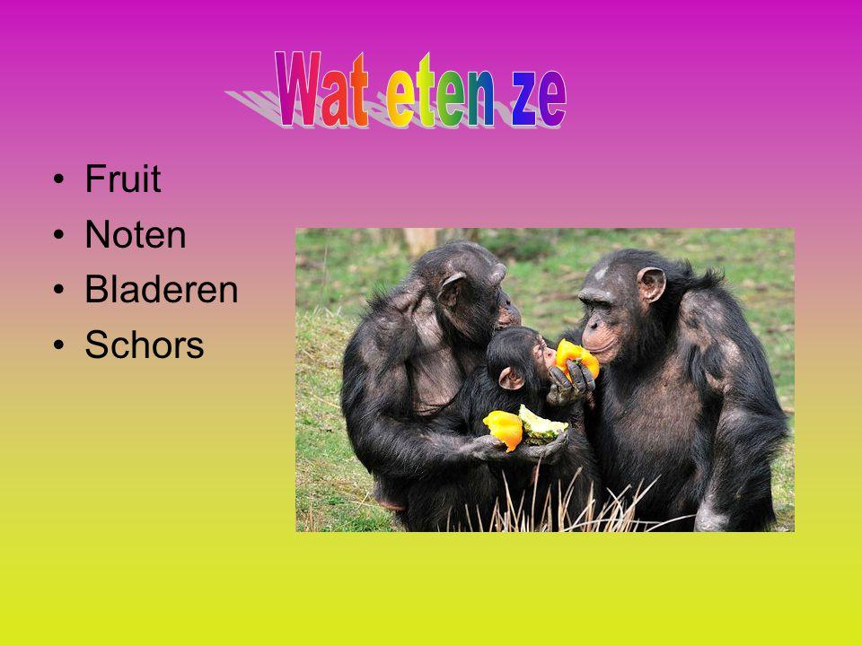 Wat eten ze Fruit Noten Bladeren Schors