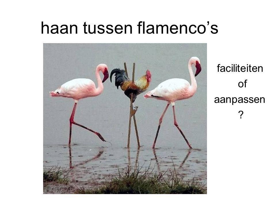 haan tussen flamenco's