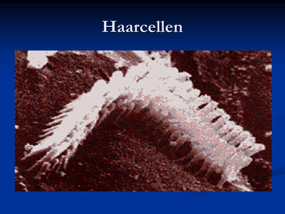 Haarcellen