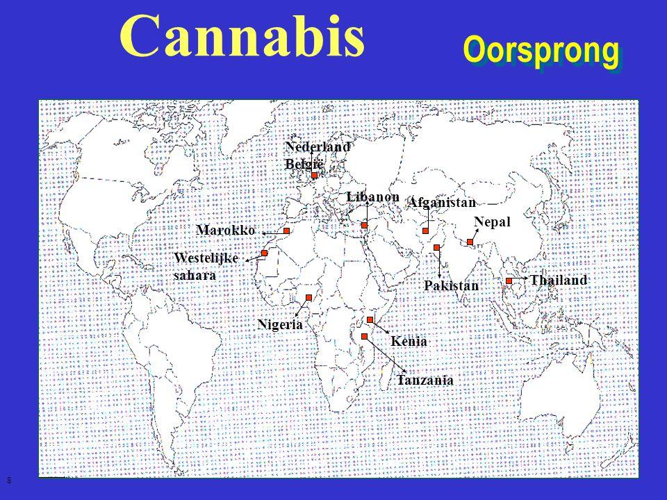Cannabis Oorsprong NederlandBelgië Libanon Afganistan Nepal Marokko