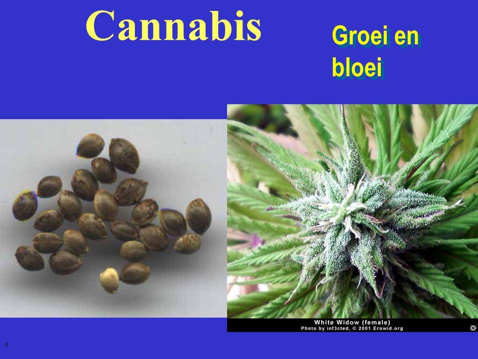 Cannabis Groei en bloei 9