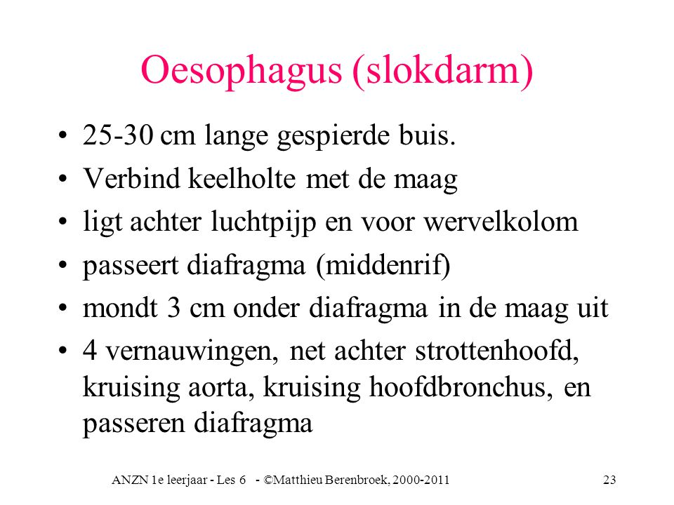Oesophagus (slokdarm)