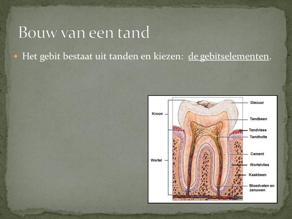 Bouw van een tand Het gebit bestaat uit tanden en kiezen: de gebitselementen.