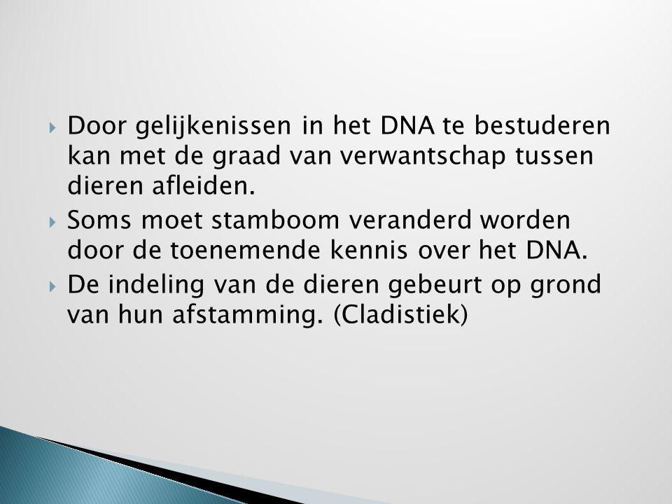 Door gelijkenissen in het DNA te bestuderen kan met de graad van verwantschap tussen dieren afleiden.