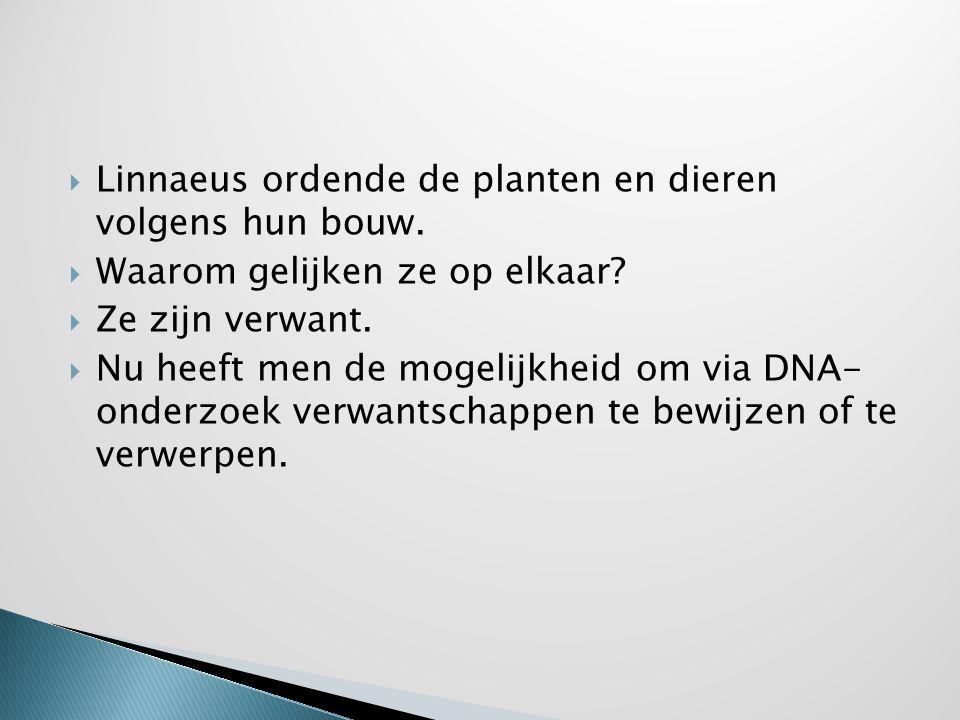 Linnaeus ordende de planten en dieren volgens hun bouw.
