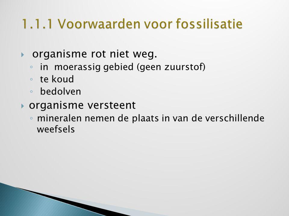 1.1.1 Voorwaarden voor fossilisatie