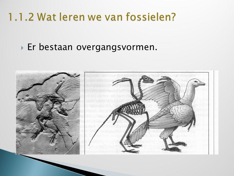 1.1.2 Wat leren we van fossielen