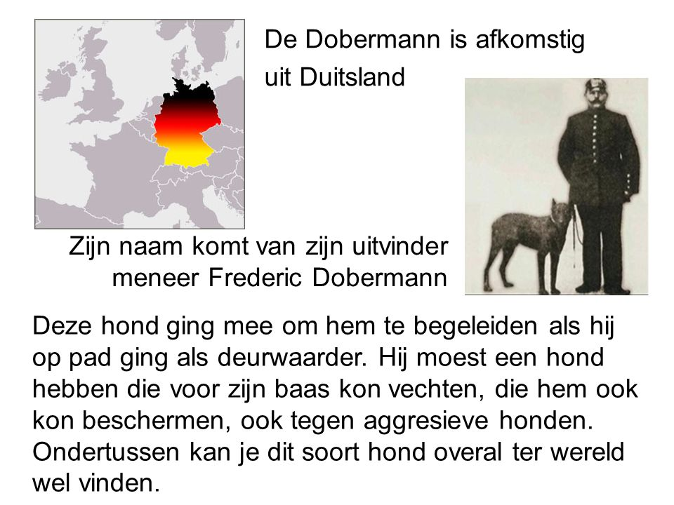 De Dobermann is afkomstig