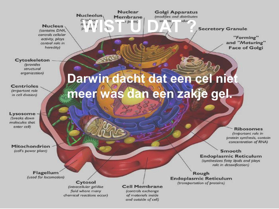 WIST U DAT Darwin dacht dat een cel niet meer was dan een zakje gel.