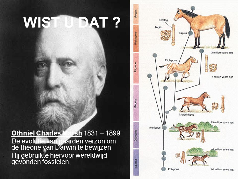 WIST U DAT Othniel Charles Marsh 1831 – 1899