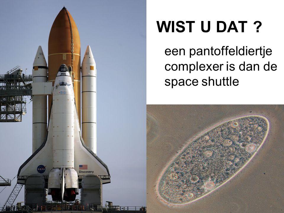 WIST U DAT een pantoffeldiertje complexer is dan de space shuttle