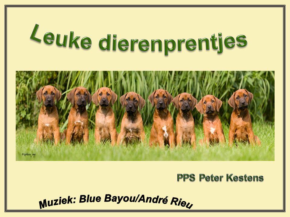 Muziek: Blue Bayou/André Rieu