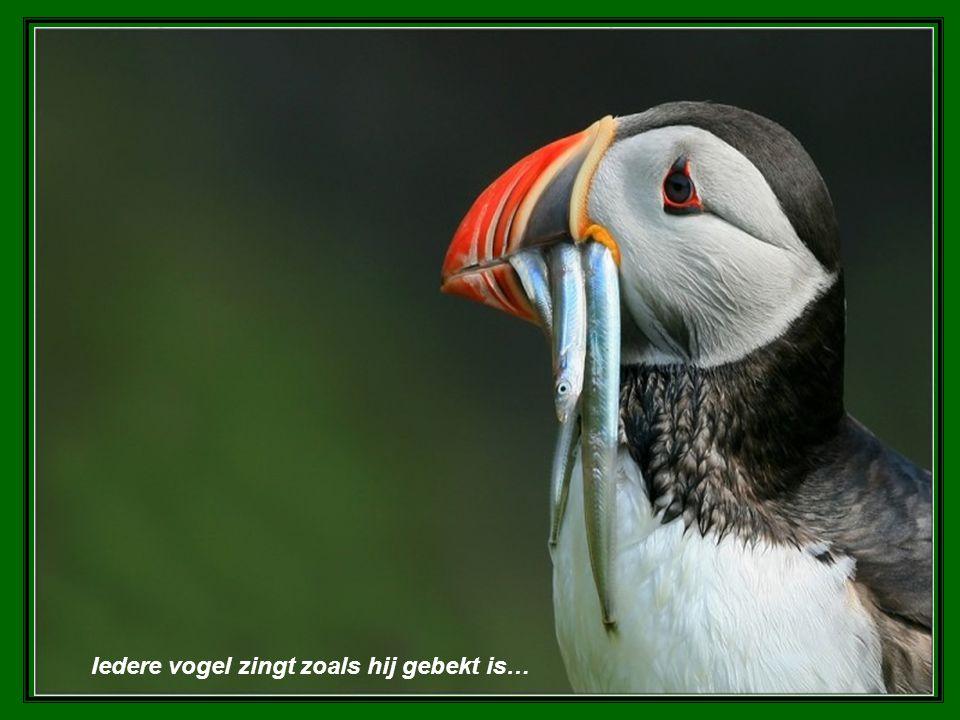 Iedere vogel zingt zoals hij gebekt is…
