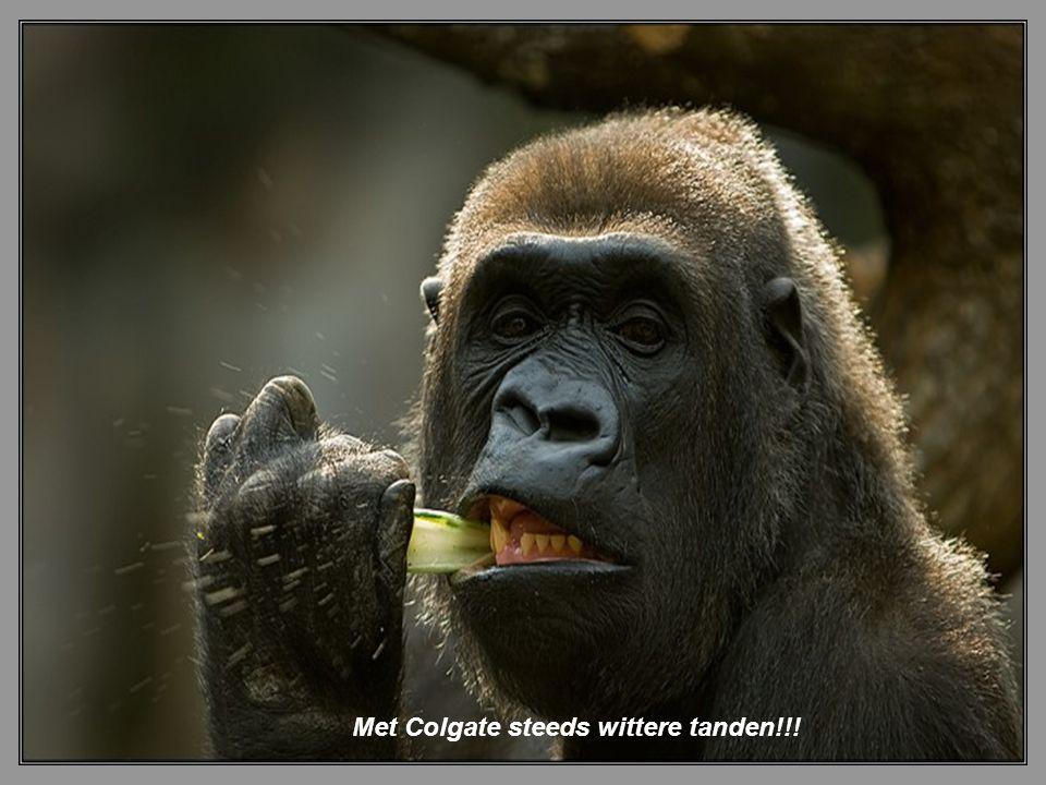 Met Colgate steeds wittere tanden!!!