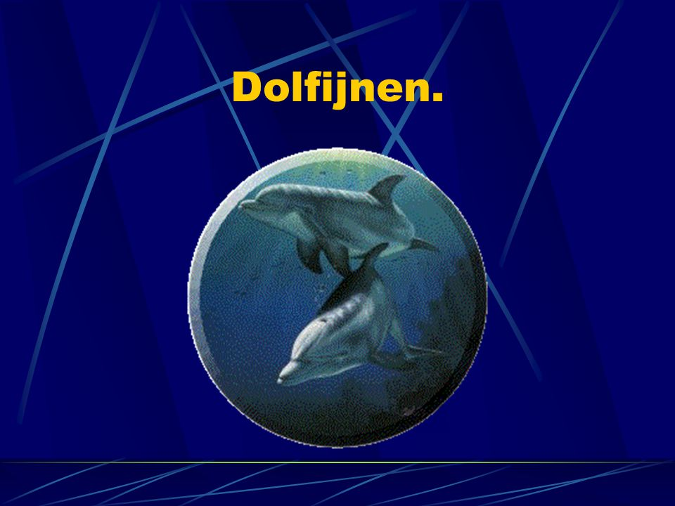 Dolfijnen.