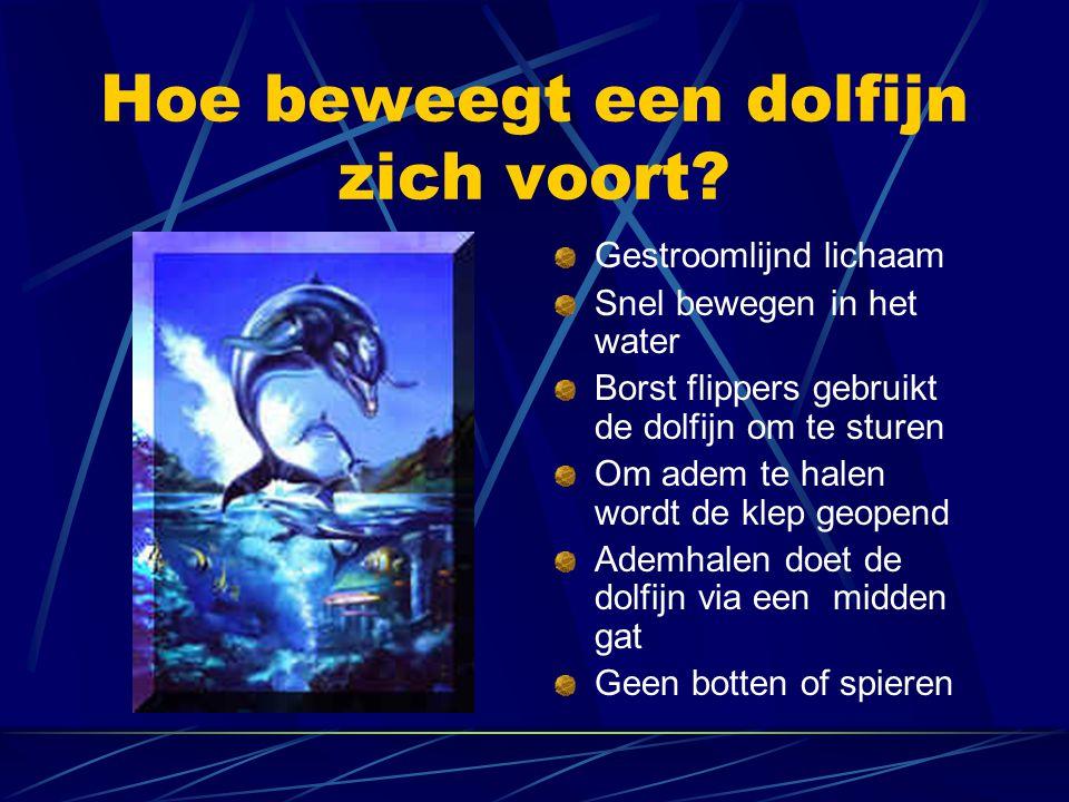 Hoe beweegt een dolfijn zich voort