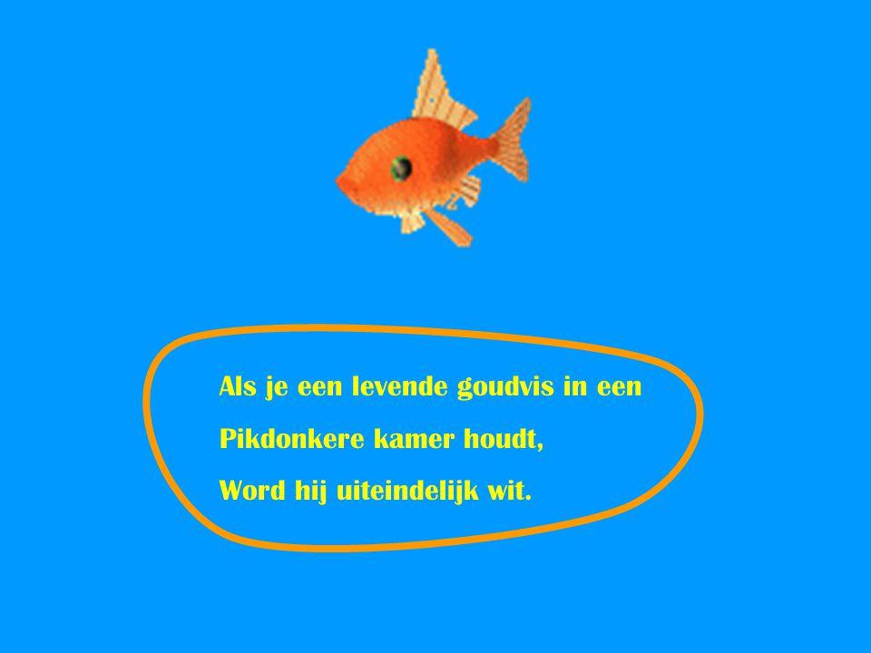Als je een levende goudvis in een