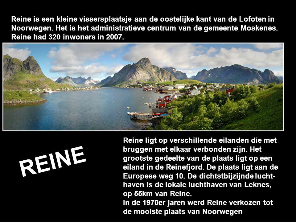 Reine is een kleine vissersplaatsje aan de oostelijke kant van de Lofoten in Noorwegen. Het is het administratieve centrum van de gemeente Moskenes. Reine had 320 inwoners in 2007.