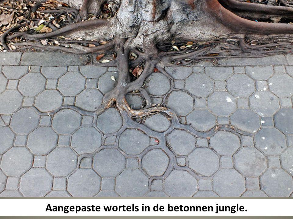Aangepaste wortels in de betonnen jungle.