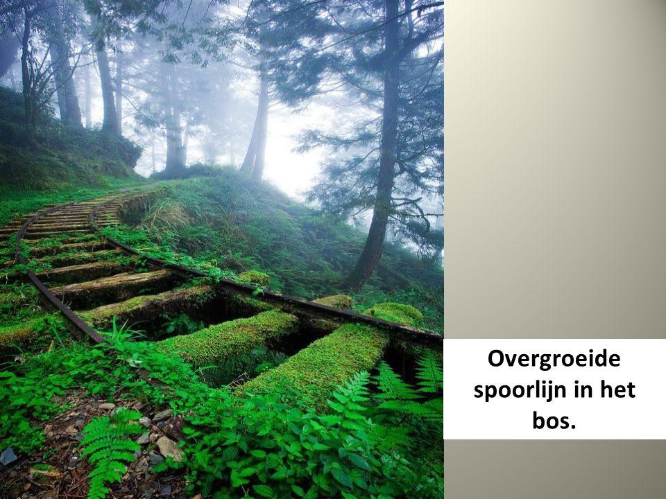 Overgroeide spoorlijn in het bos.