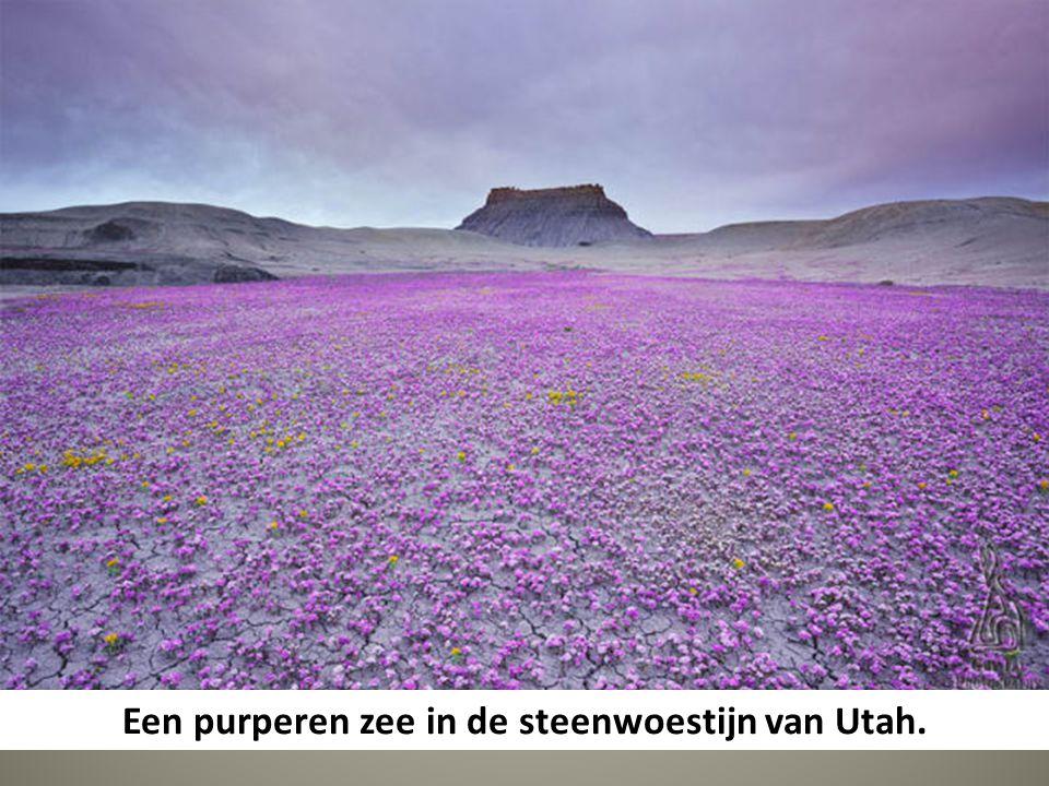 Een purperen zee in de steenwoestijn van Utah.