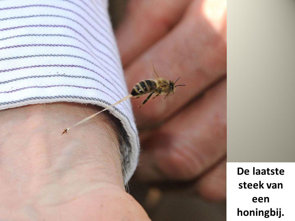 De laatste steek van een honingbij.