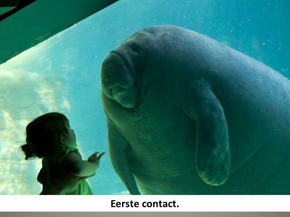 Eerste contact.