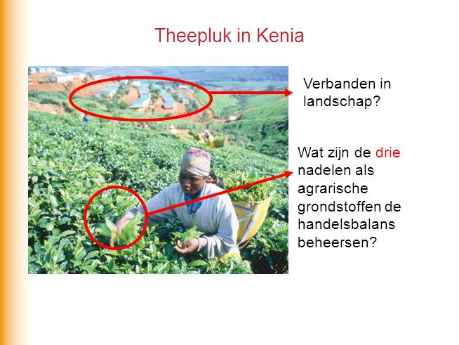 Theepluk in Kenia Verbanden in landschap