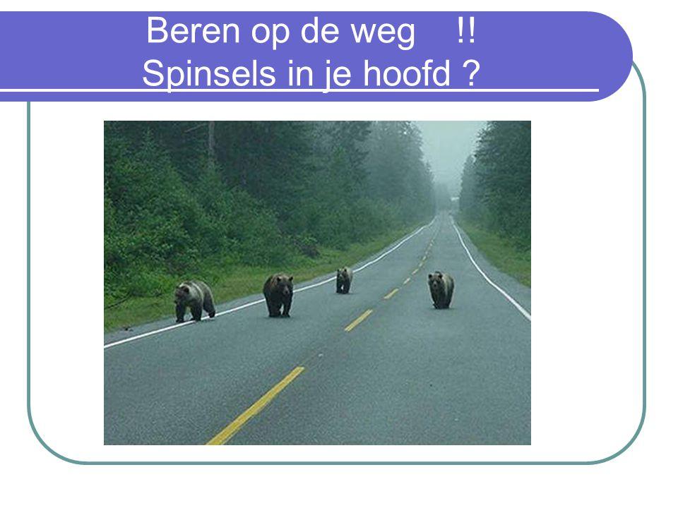 Beren op de weg !! Spinsels in je hoofd