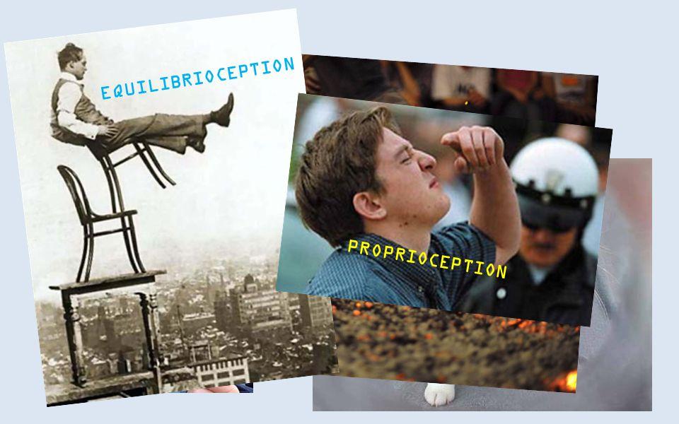 NOG MEER EQUILIBRIOCEPTION PROPRIOCEPTION