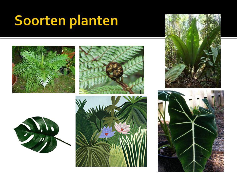 Soorten planten