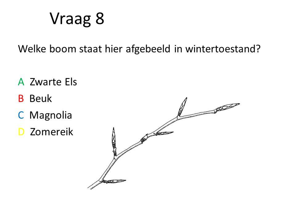Vraag 8 Welke boom staat hier afgebeeld in wintertoestand